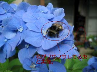 113_13641.jpg