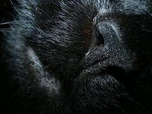 ko-nyan-nose.jpg
