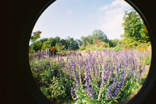 ハーブ園の庭でその2。