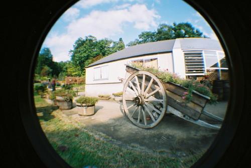 ハーブ園の庭でその5。