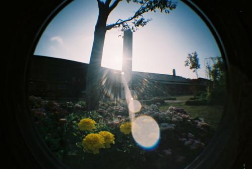 ハーブ園の庭でその3。