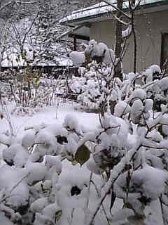 雪が振った。