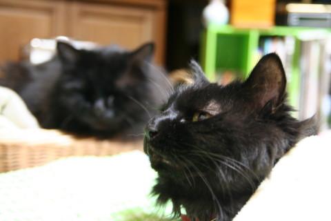 Black_cats